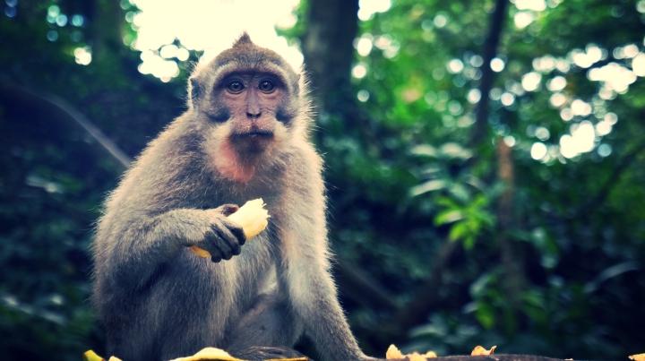 MonkeyFor1