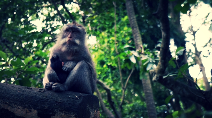 MonkeyTown1